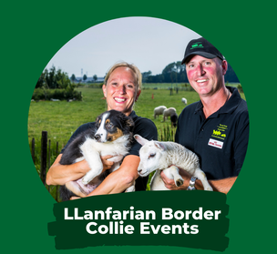 LLanfarian Border Collie Events